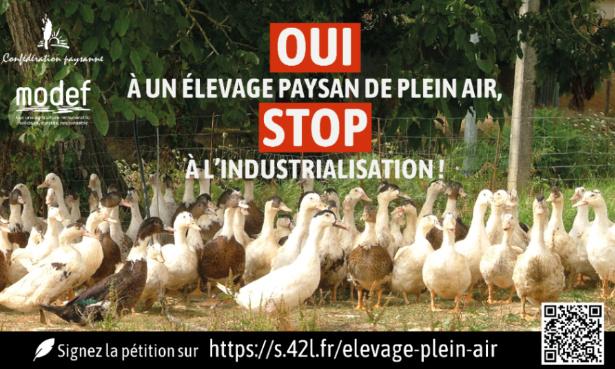 Pétition : Pour l'élevage de volailles en plein air toute l'année