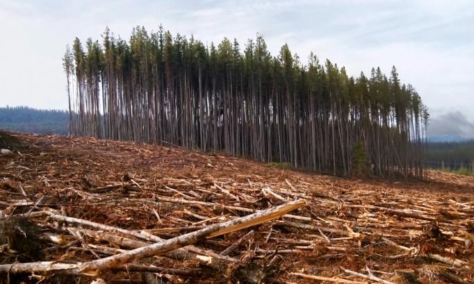 Stop à l'abattage de la forêt