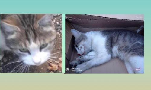 Pétition : Il faut sauver les chats de la RD 140 !
