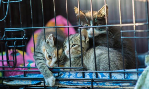 Pétition contre vente de chats/chiens dans des cages ridiculement petites où l'on en voit une tristesse sur leur tête