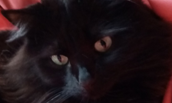 Alerte villes dont les chats disparaissent, contactez-moi !
