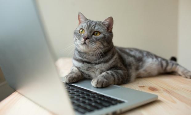 Stop aux ventes de chiens et de chats sur internet