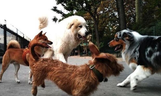 Projet d'aménagement d'un Parc Canin pour l'entité de Jurbise
