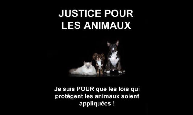 """Module obligatoire de """" sensibilisation aux droits des animaux"""" pour les futur(e)s juges en France"""