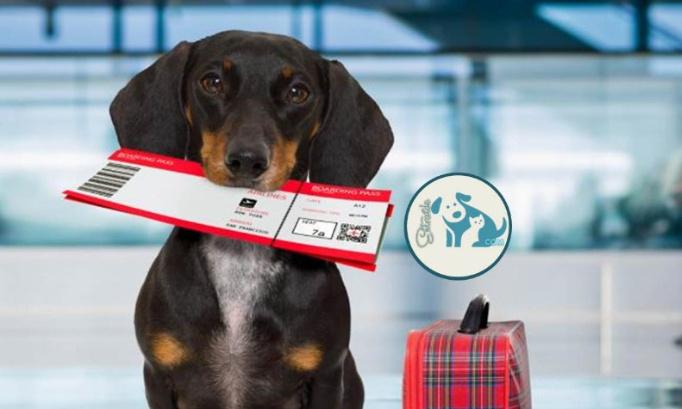 Pétition : AIR FRANCE freine délibérément le rapatriement des animaux des DROM (départements et régions d'outre-mer) sauvés par les associations.