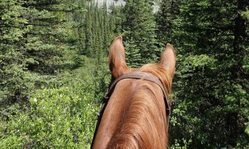 Pétition : CHASSE - Les cavaliers ne veulent plus avoir peur !