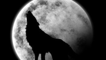 Pétition : Chasse honteuse au loup : exigeons la démission de Ségolène Royal !