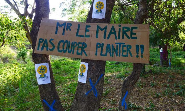Pétition : Non à l'abattage de la forêt de Casabona !