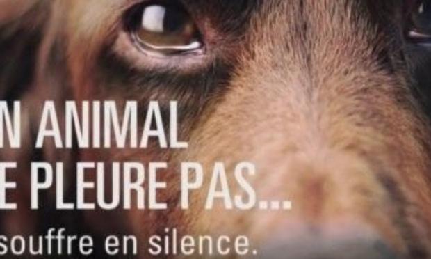 Pétition : Stop à la maltraitance animale
