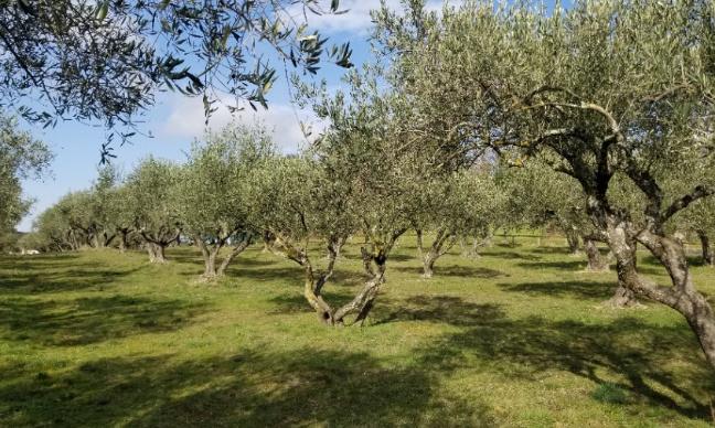 Pétition : Refus de bétonnage dans l'oliveraie de Saint-Bénézet
