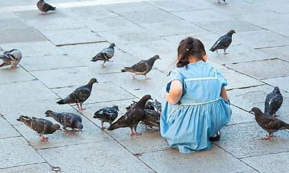 Stop au carnage des pigeons à Charroux !