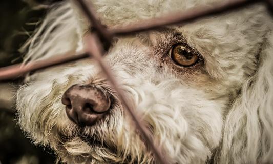 Maltraitance animale : que les peines soient plus fortes