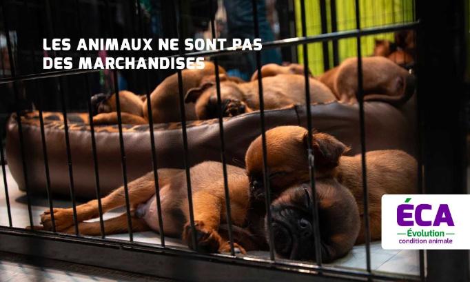Pétition : Paris ne doit plus accueillir des salons et expositions ventes d'animaux vivants
