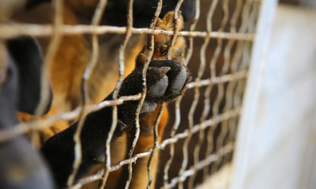 Sauver les chiens de Mayotte