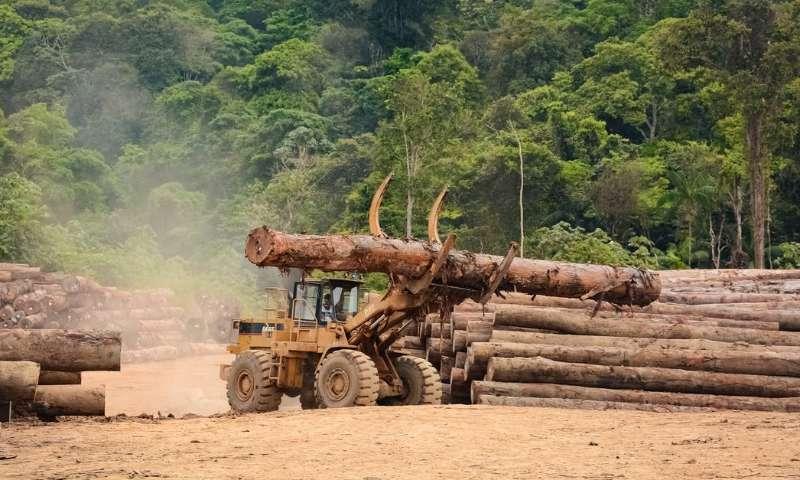 Signez pour refuser la déforestation de l'Amazonie