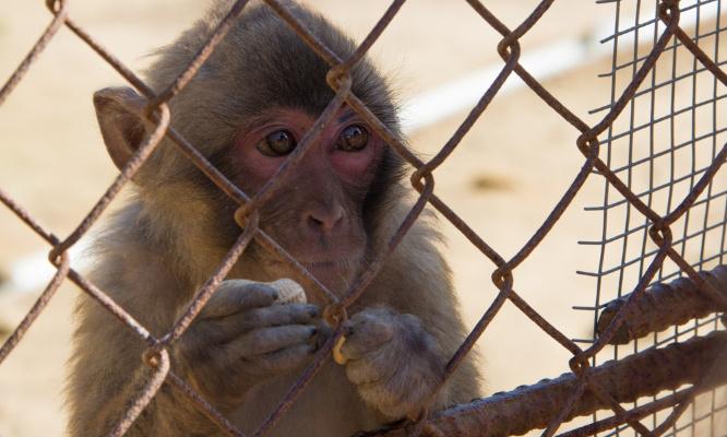 Pétition : Pour que les scientifiques brisent l'omerta qui règne sur l'expérimentation animale
