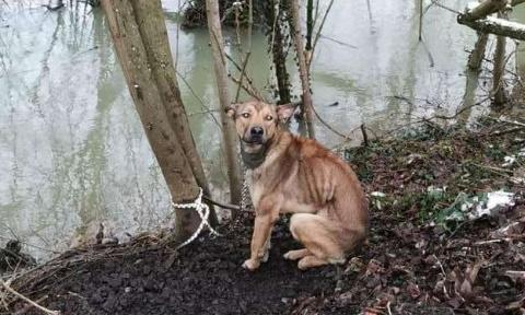 Pétition : Chien SANS NOM lâchement abandonné et attaché à un arbre pour mourir - Mobilisons-nous pour un registre animalier aux mairies sous peine d'amende