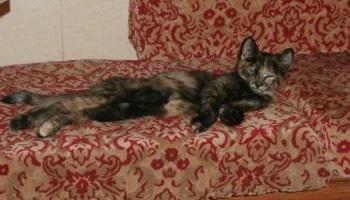 Stop aux fusillades inadmissibles sur des chats innocents à Bournezeau en Vendée !