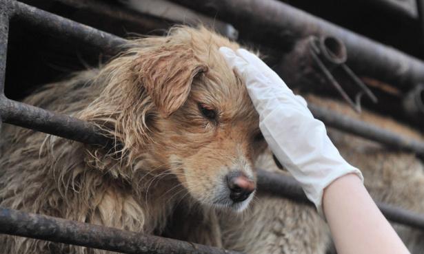 Chiens torturés : stop au massacre pour l'industrie du cuir !