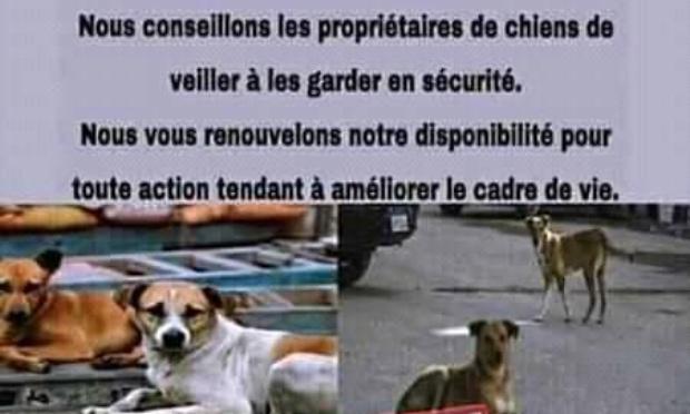 Pétition : Quand le Sénégal abat les chiens errants…