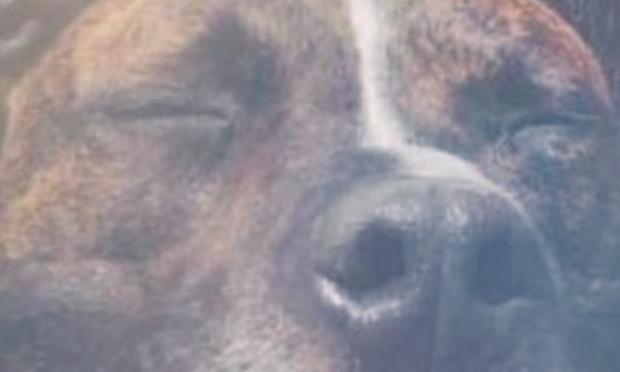 Je souhaite que vous réexaminiez le dossier du chien curtis, un animal innocent ! Liberté pour Curtis !