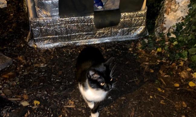 Retour de la cabane pour le chat errant Minou et ses amis