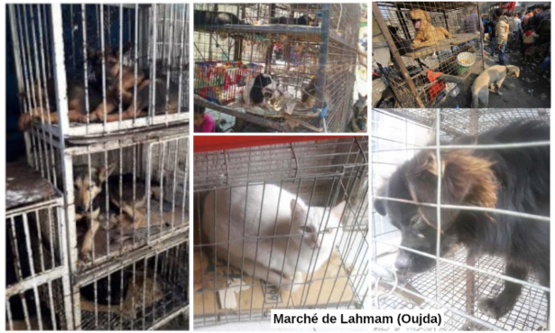 Fermez le marché aux chiens, chats, et autres animaux d'Oujda (Maroc)