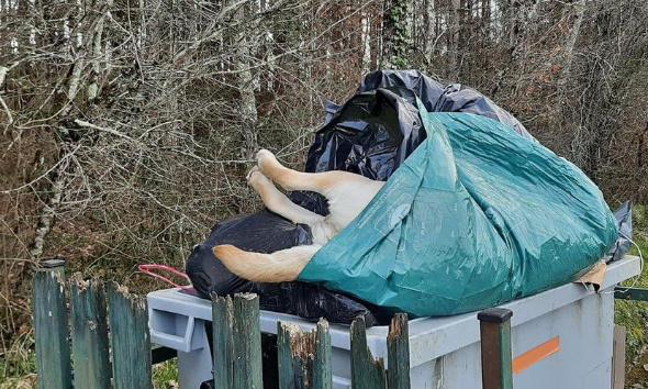 Justice exemplaire et enquête pour le chien retrouvé mort dans une poubelle à Barbaste ( Lot et Garonne )