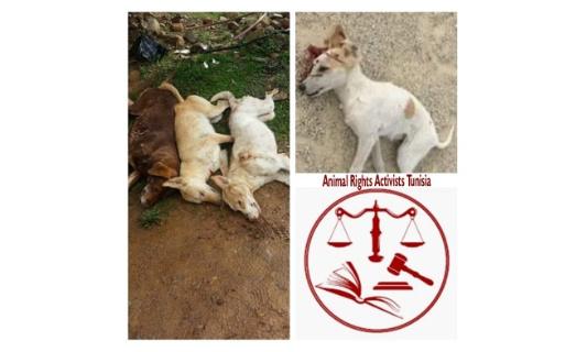 Loi de Protection Animale en Tunisie