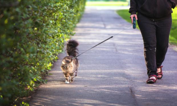 Interdire la vente de harnais, de colliers et laisses pour chats.