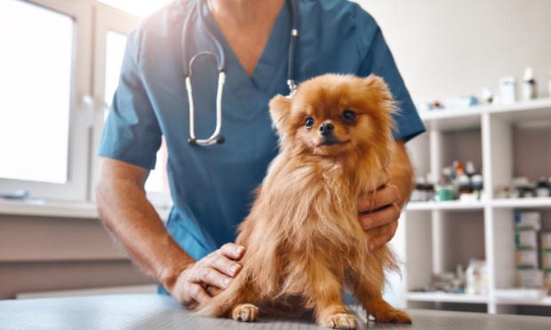 Contrôles des vétérinaires