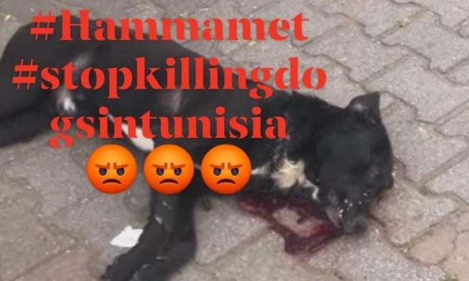 Pétition : Arrêtez les abattages des chiens errants ! #Municipalité_Hammamet #stopkillingdogsintunisia