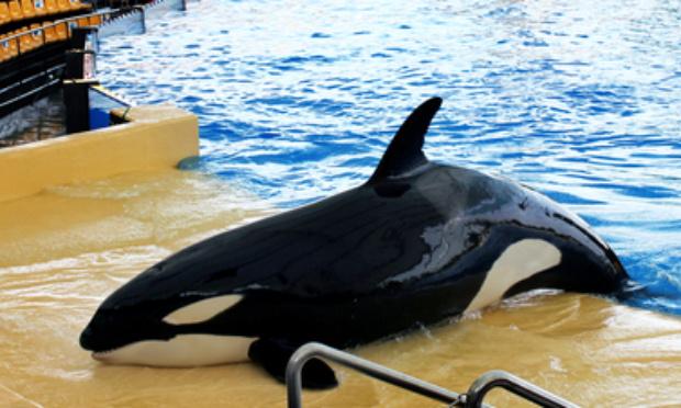 Pétition : Contre l'esclavage des orques