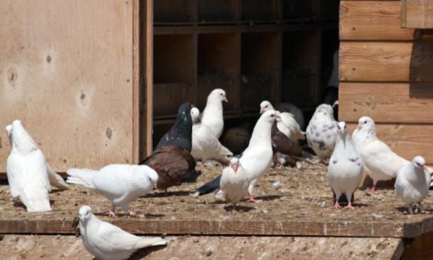 Construction d'un pigeonnier