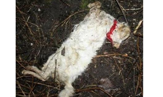 Chat abandonné : il est retrouvé en état de décomposition