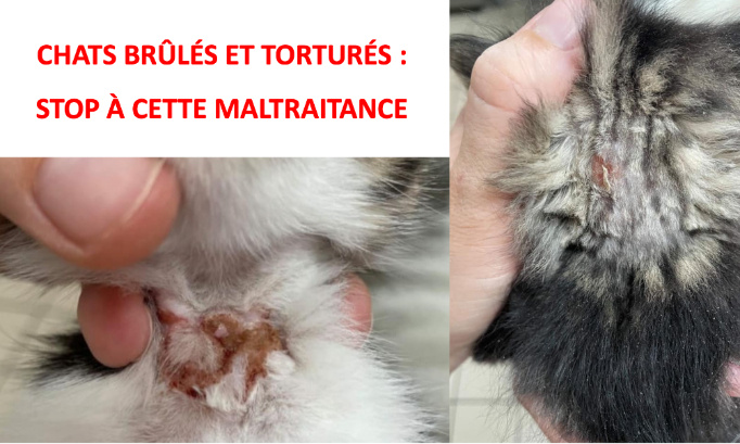 CRANE FRACTURÉ, CHAT TORTURÉ : JUSTICE POUR CES CHATONS MALTRAITÉS