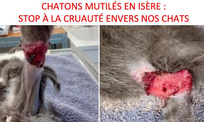 CHATONS MUTILÉS EN ISÈRE : UNE DÉCOUVERTE TERRIFIANTE