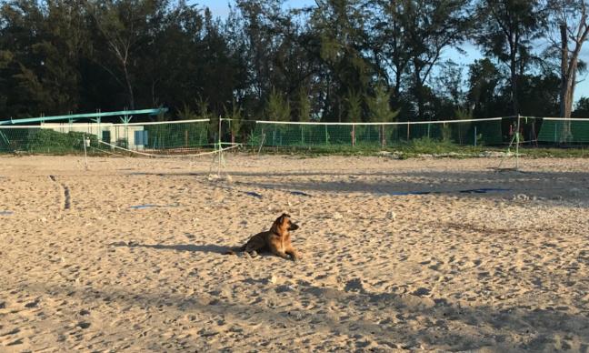 Accorder des plages horaires pour promener les chiens librement à la passe de l'ermitage