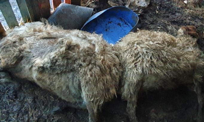 Justice exemplaire, enquête et retrait définitif du permis de posséder un animal suite au charnier retrouvé par la police à Strépy-Bracquegnies