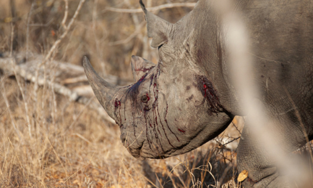 Pour la sauvegarde des rhinocéros
