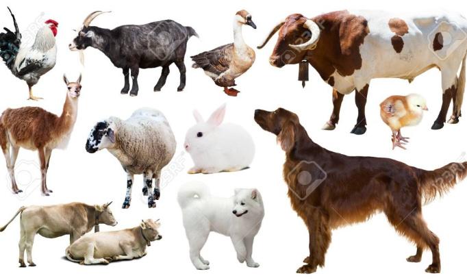 Création d'un ministère des droits des animaux en France