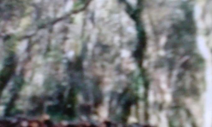 Dans La Forêt ! Les arbres sont coupés .