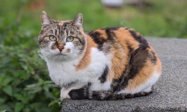 NON à la chasse aux chats, OUI à un contrôle raisonné de leur population