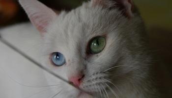 Pétition : Justice pour Susie, un chat tué volontairement par un quad !