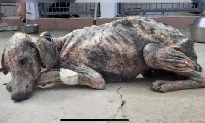 URGENCE !! STOP A LA MALTRAITANCE ANIMALE DANS LES DOM-TOM