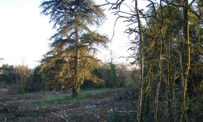 Pétition : L'arrêt de la coupe à blanc d'arbres centenaires, poumon de la bastide de Lisle sur Tarn