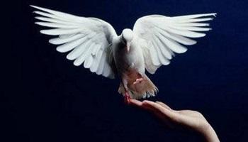 Pétition : Pour la paix civile en France !
