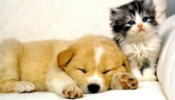 Pétition : Non à l'euthanasie par gazage !