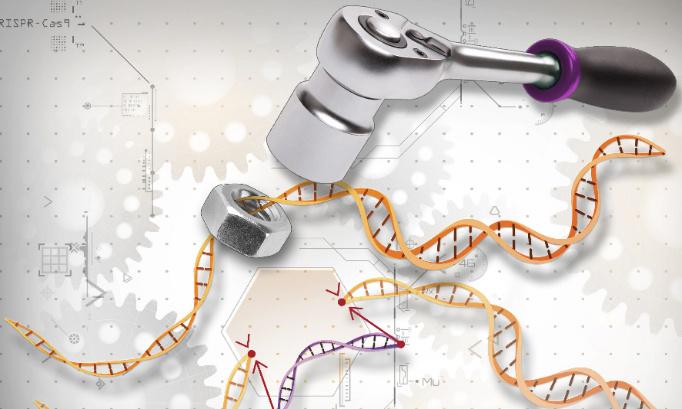 """Pour un moratoire sur l'utilisation du """"ciseau génétique"""" CRISPR/cas9"""
