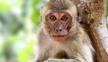 We reject the opening/expansion of the breeding centre for 1600 primates destined for animal...